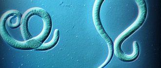 острицы в организме