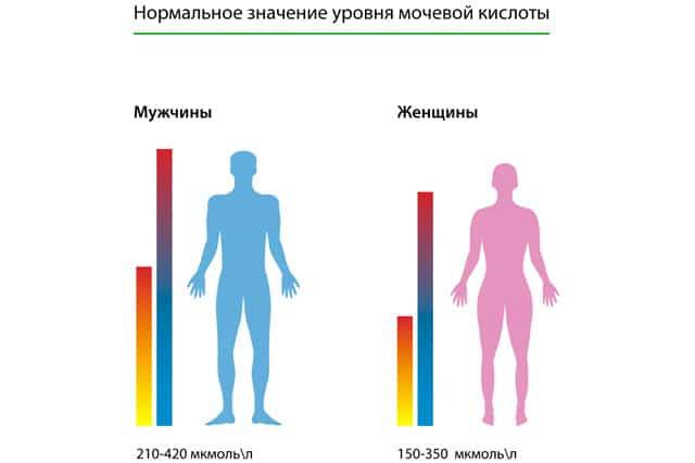нормы уровня мочевой кислоты в крови у женщин и мужчин