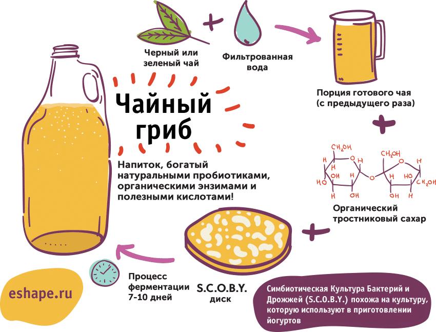 приготовление чайного гриба