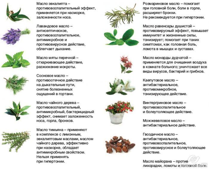 растения которые используются для эфирных масел